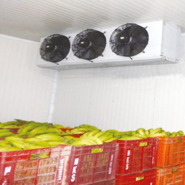 Banana Cold Room 10X10X10