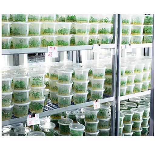 Tissue Culture Lab 10x10x10-ft