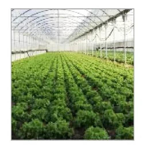 Greenhouse Polycarbonate Sheet